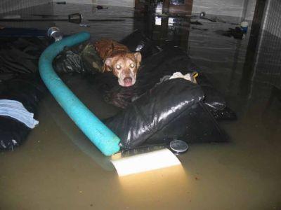 Katrina Flood 006
