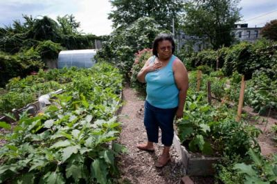 THREATENED: The Reverend DeVanie Jackson stands between rows of crops planted at the Brooklyn Rescue Mission's farm in Bedford-Stuyvesant. PHOTO: ANDREW HINDERAKER