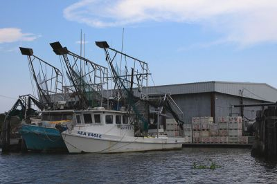 Shrimping boats docked at marinas in Louisiana have become a common sight since the spill. PHOTO: ERIKA BLUMENFELD
