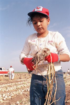 A still form the film The Harvest (La Cosecha) whcih details the lives of children migrant workers, will be shown as part of Labor History Month at El Museo del Barrio.