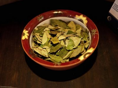GREEN GOLD: Coca leaves are an important cultural symbol in the Andean region, but they are also the source of the cocaine trade. (Credit: Flickr/whertha)