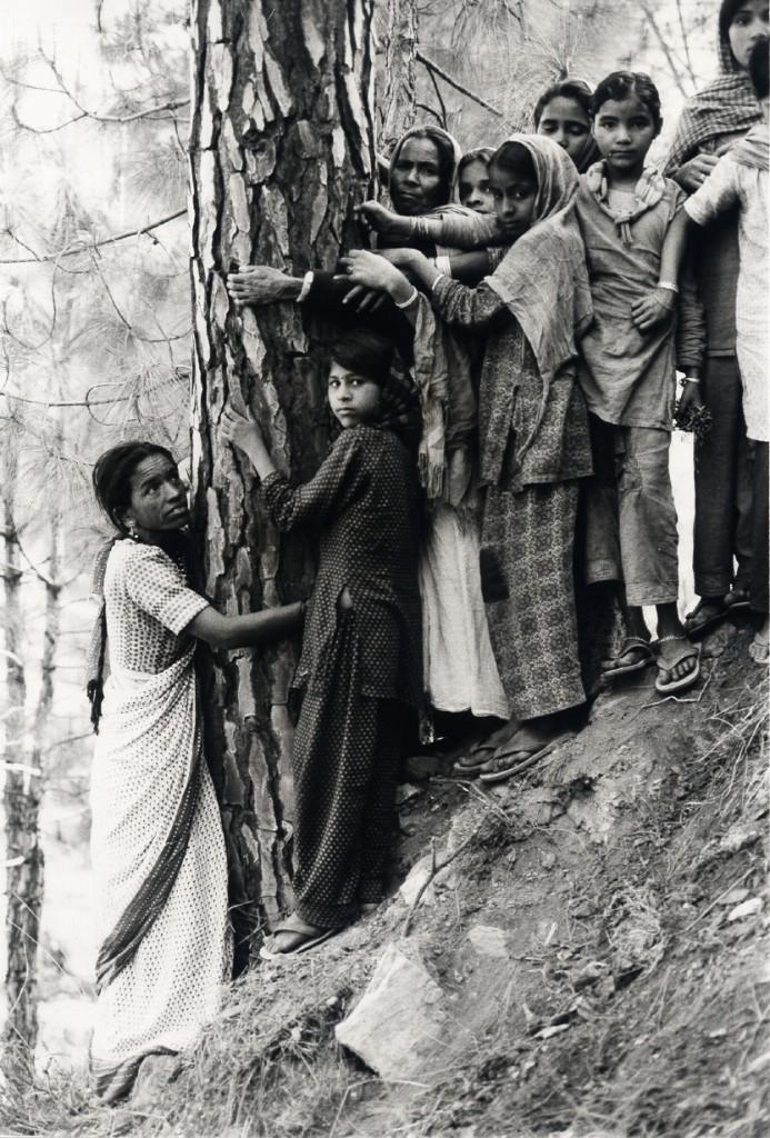 treehumansolidarity.jpg