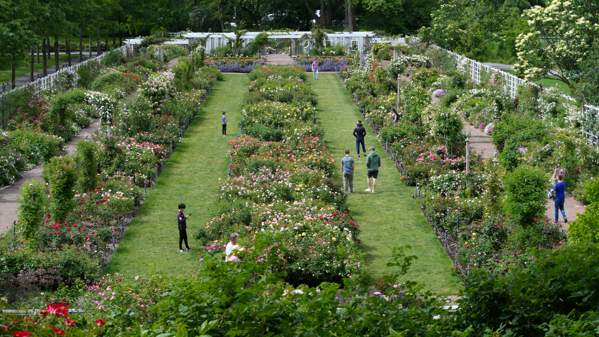 Highrises Could Cast Shadow Over Brooklyn Botanical Garden Warns Garden President The Indypendent